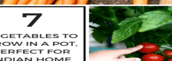 7-Vegetables-to-Grow-in-a-Pot-Which-are-Perfect-for-Every-Indian-Home-768x495